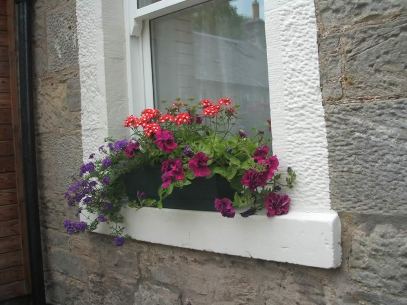 One of the window boxes