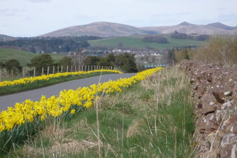 A view of the Pentland hills from above the village
